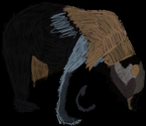 gezeichnerter Bär aus dem Bärenpark Worbis